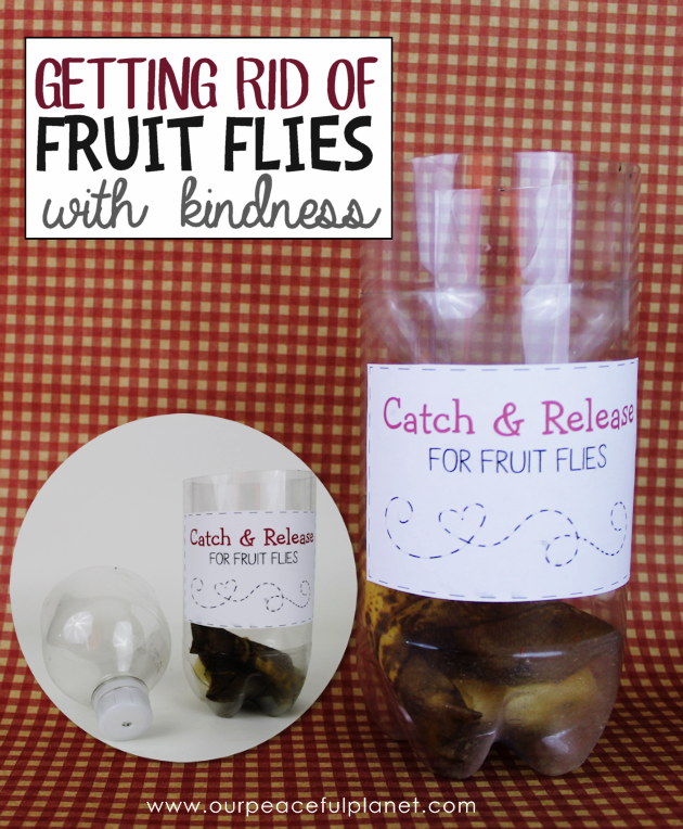 healthy fruit cake recipe getting rid of fruit flies