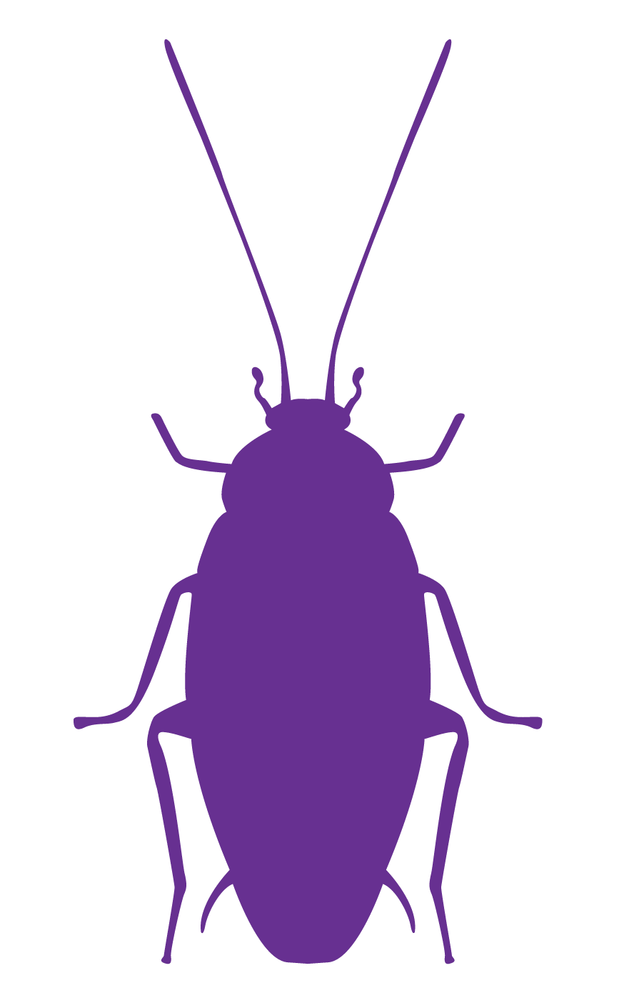 No Kill Natural Pest Control For Your Home