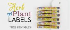 Herb Plant Labels DIY (Free Printables!)