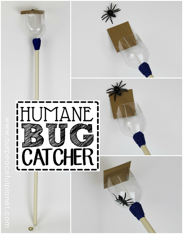 Make this simple but Humane Bug Catcher from a soda bottle. It allows you to kindly catch them at arms length, then take them outside and set them free.