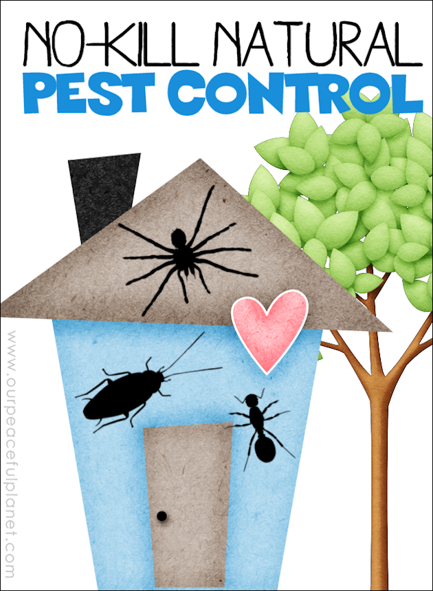 Use these no-kill natural pest control methods that work and will keep your home safe and free of the toxic chemicals and poisons in normal bug spray.