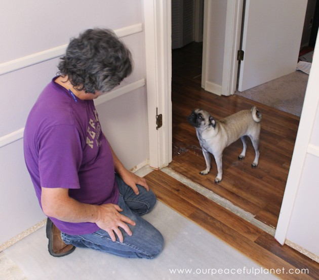 Almost anyone can learn how to install laminate flooring. Check out our step by step instructions with photos. It's easier and cheaper than you might think!