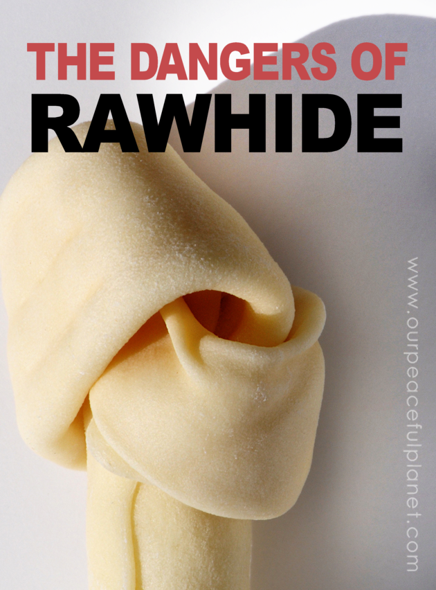 Unknown to many pet owners, rawhide for dogs has no FDA regulations and has caused sickness and even death. Read why this common treat is so dangerous.