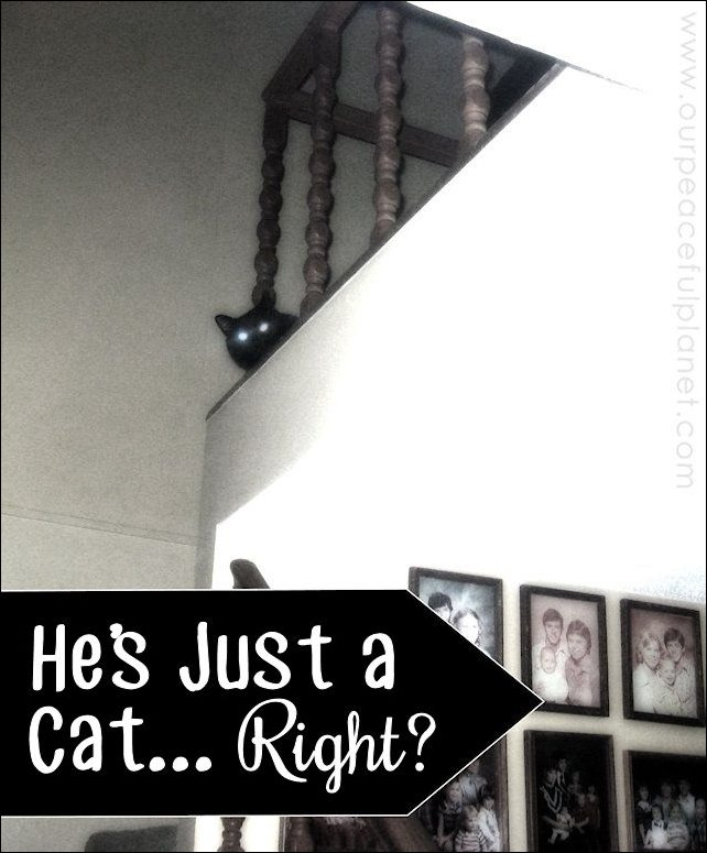 He's Just a Cat... Right?