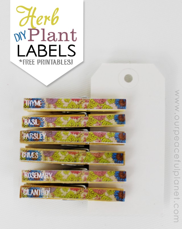 photograph about Printable Plant Labels called Herb Plant Labels Do-it-yourself (Cost-free Printables!)